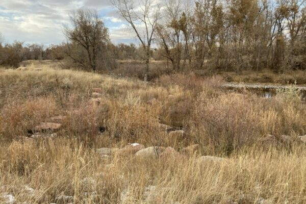 West Vine Outfall - Poudre River