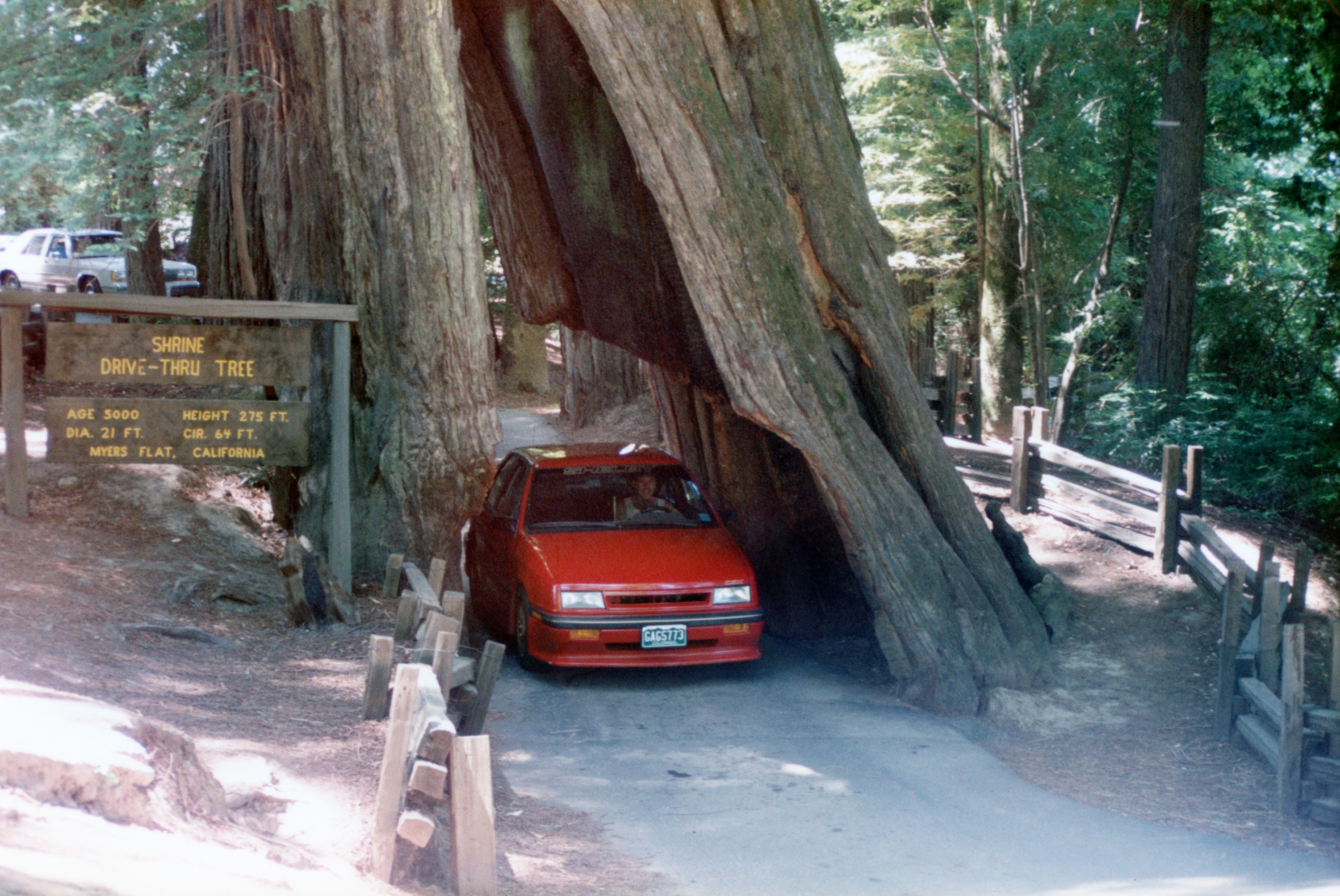 1989 Dodge Shadow CSX Giant Redwood Tree