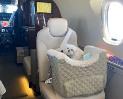 """Pink"" on her private jet. Spoiled by the Sokoly family."