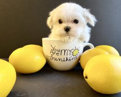 Puppy in a teacup!