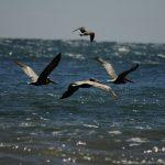 미국 서부지역 자연 100배 즐기기 (14) Malibu Point Dume State Beach