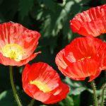 미국 서부지역 자연 100배 즐기기 (18) Carlsbad The Flower Fields & San Diego Fur Seal
