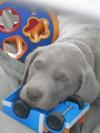 puppy web_1