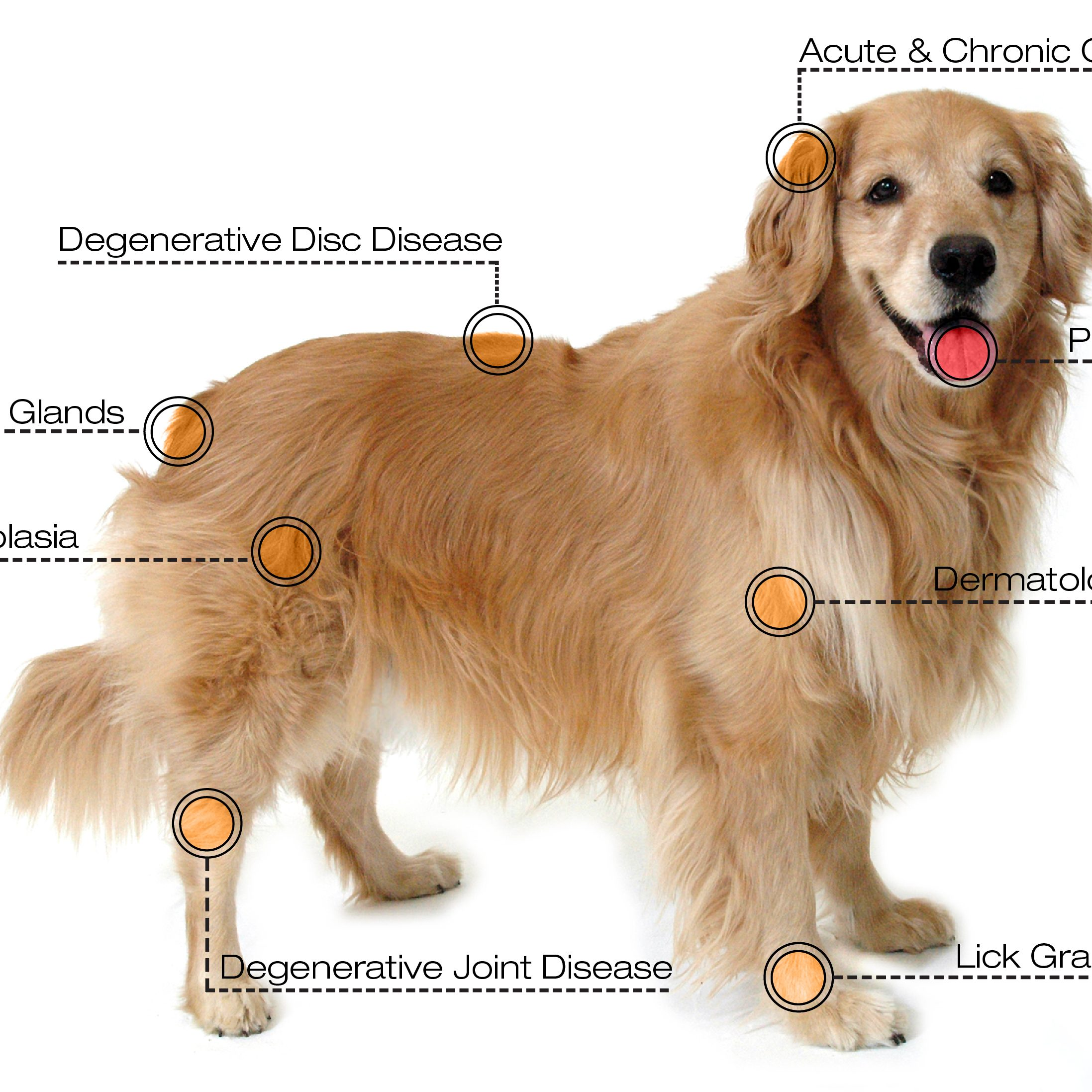 dog-diagram