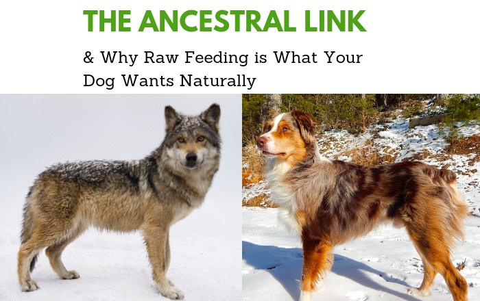 Ancestral Link Raw Feeding