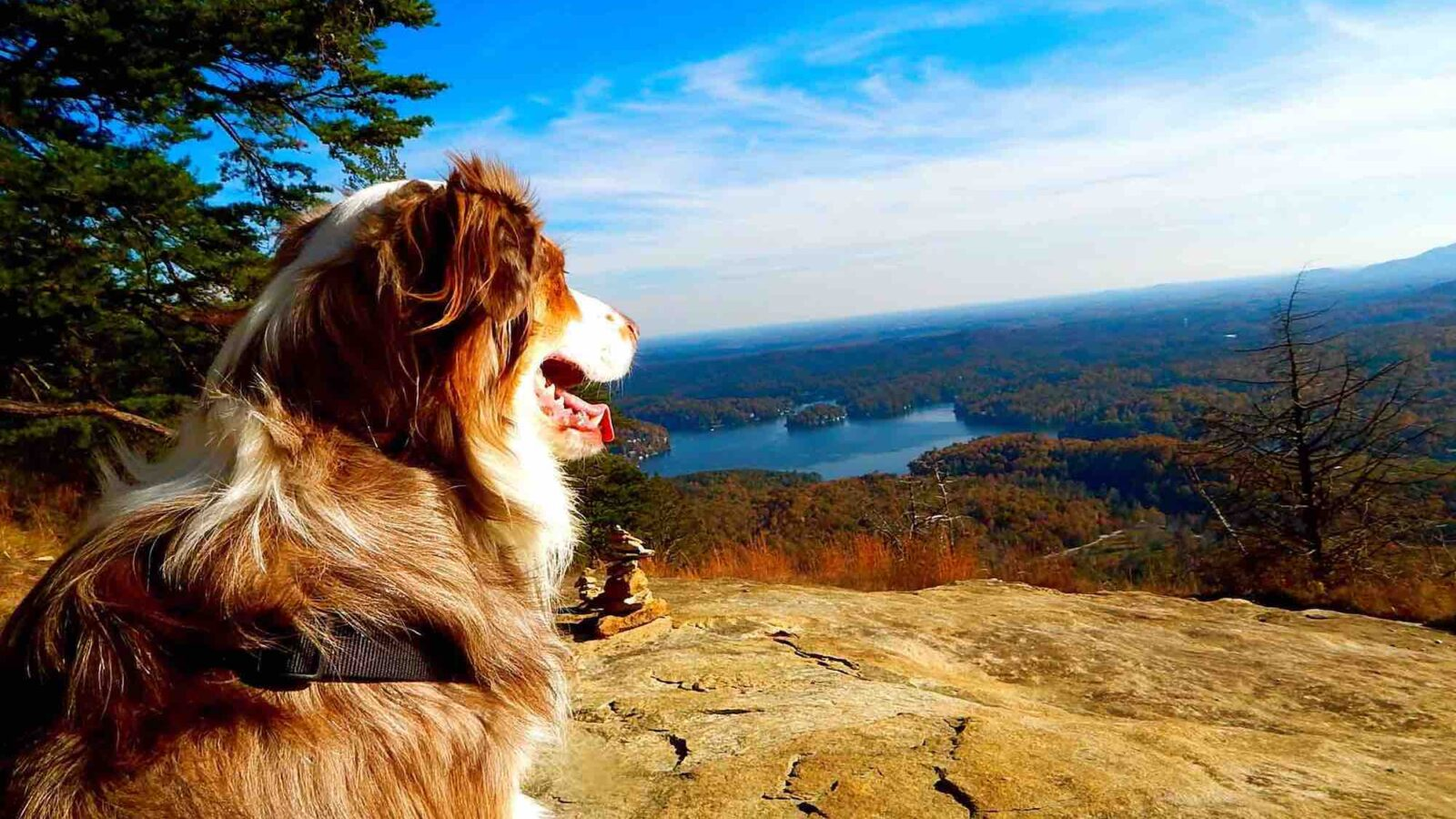 Contact Dog Gone Real - Australian Shepherd Hiking