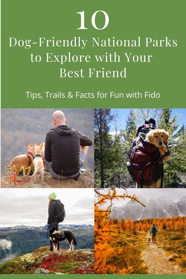 10 Dog Friendly National Parks