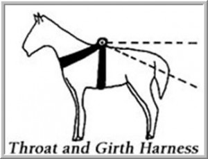 Horse- Early Ox and Throat-and-girth