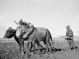 arab-farmer-ploughing-with-a-primitive-plough-near-jerusalem-1935