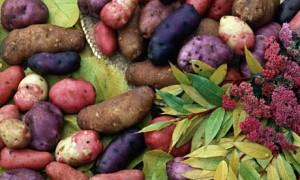 Heritage-potatoes-001