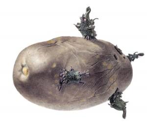 Kartoffel-1