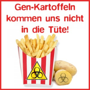 Kartoffel_Gentechnik