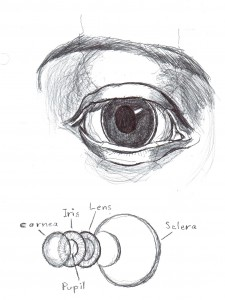 eye anatomy Forum