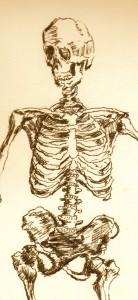 rib cage skeleton