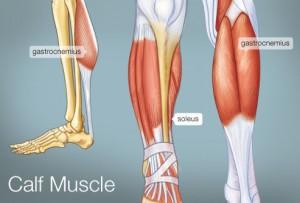 493x335_calf_muscle