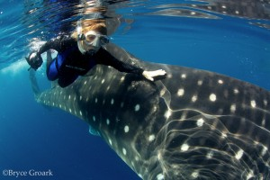 with-whale-shark