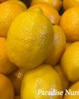 Meyers Lemon