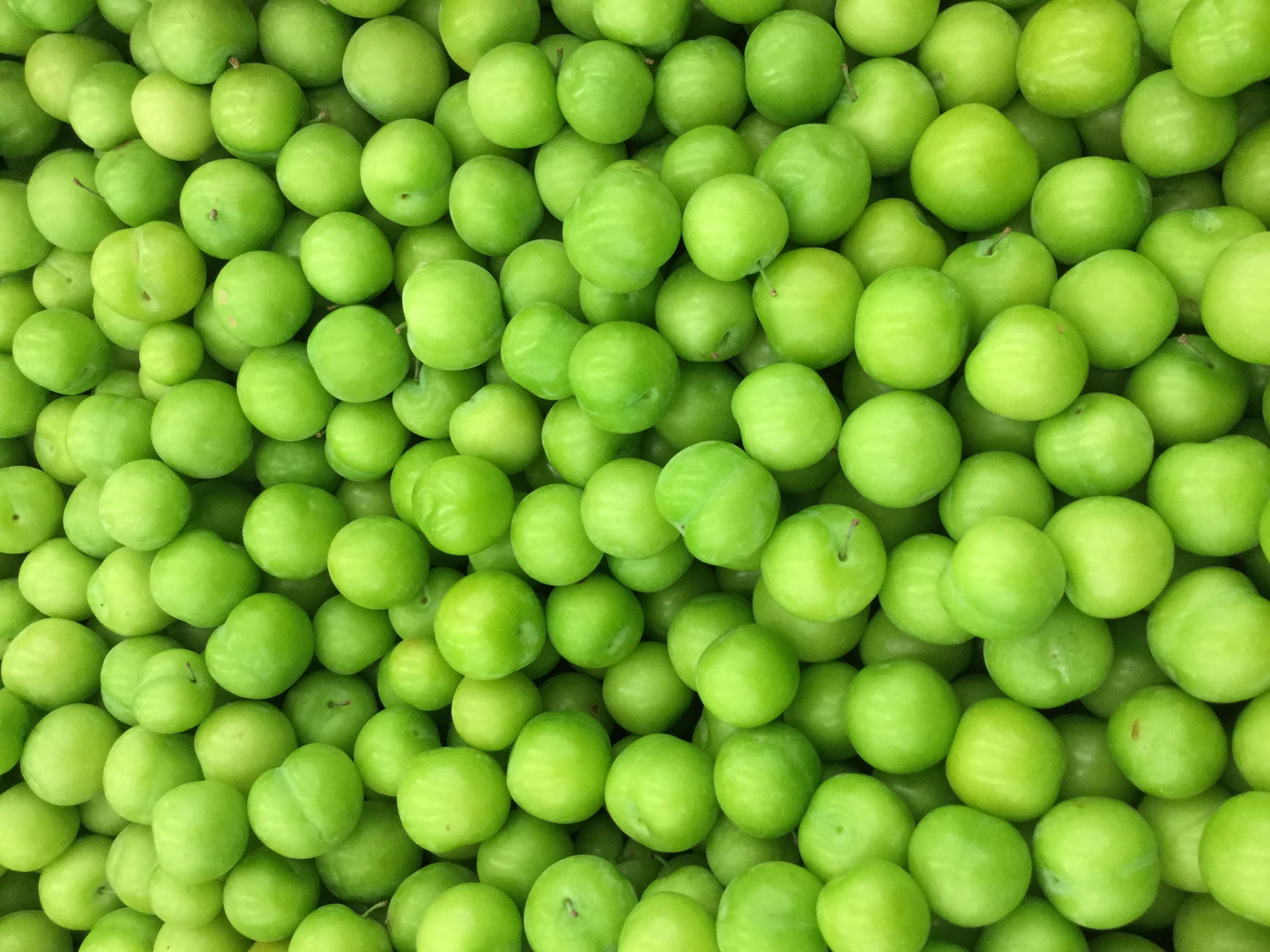 Persian Green Plum Fruits2