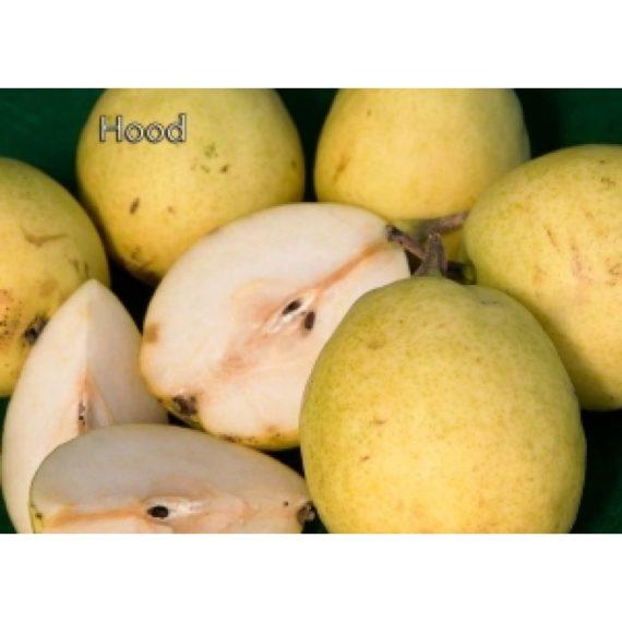 Hood pear fruit