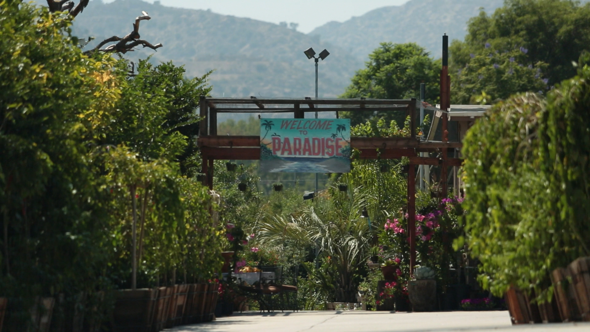 PARADISE NURSERY - Fruit Trees for sale Buy avocado and citrus trees