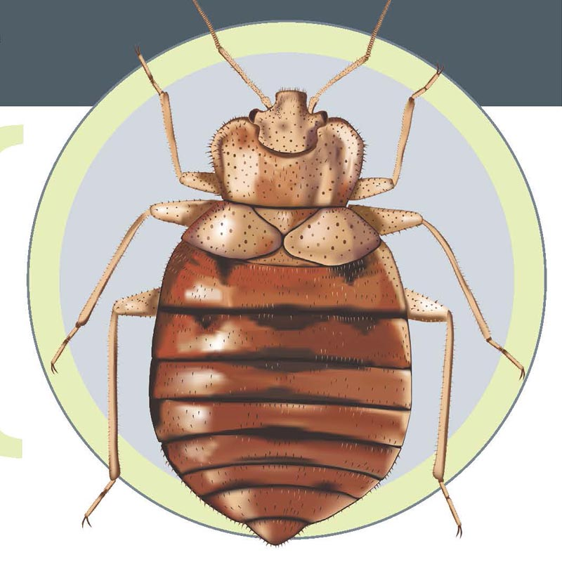 Information on Bed Bugs