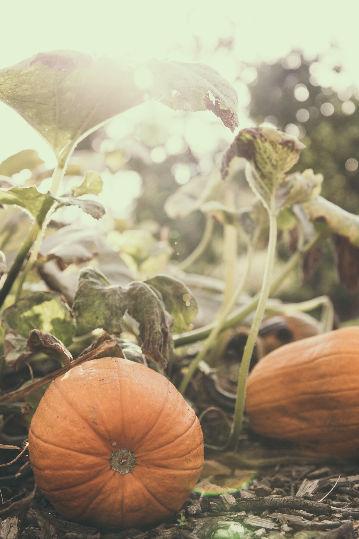 Faith Like a Pumpkin Seed