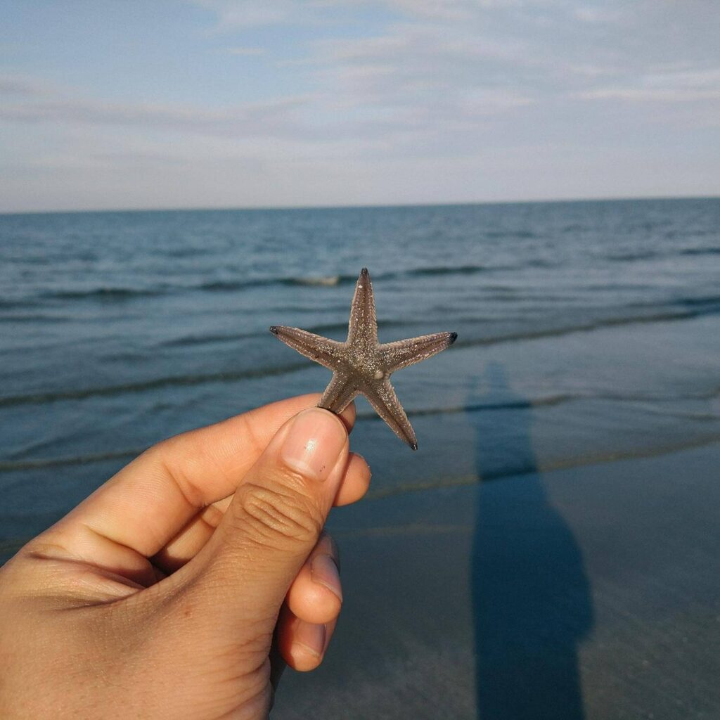 Discovered a starfish beside the sea
