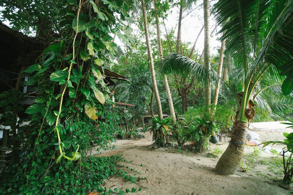 Campsite hidden behind coconut trees