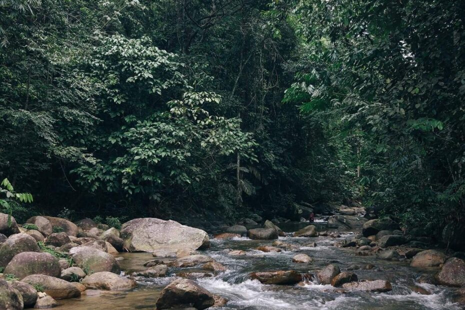 River flowing through dense forest