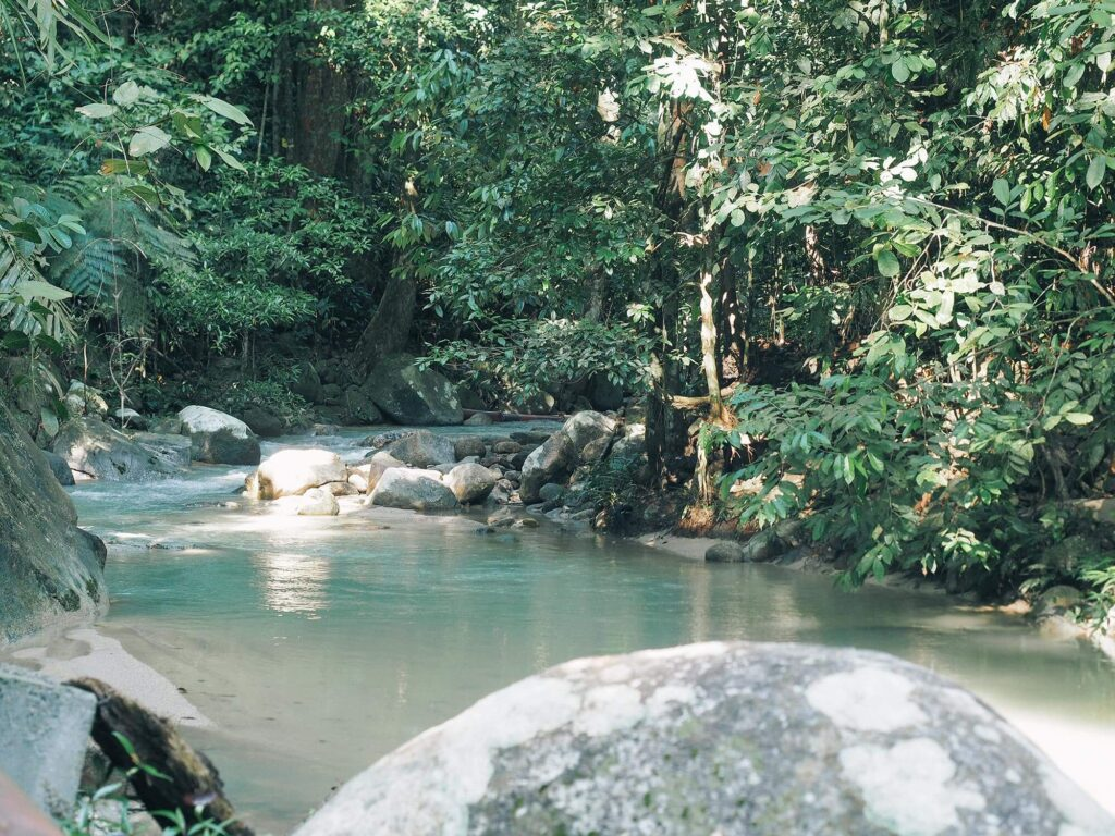 River flowing through a dense forest