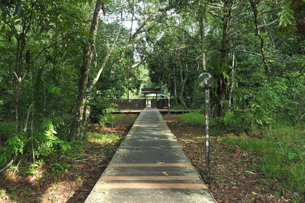 Elevated pathway in the park