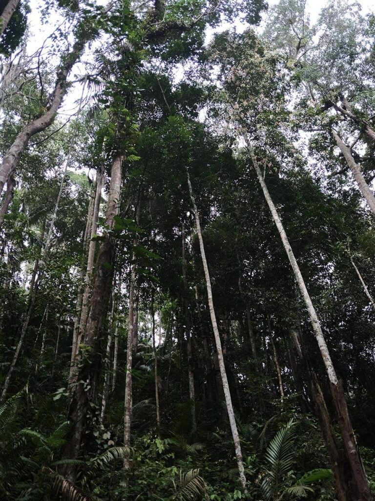 Tall trees forming a canopy