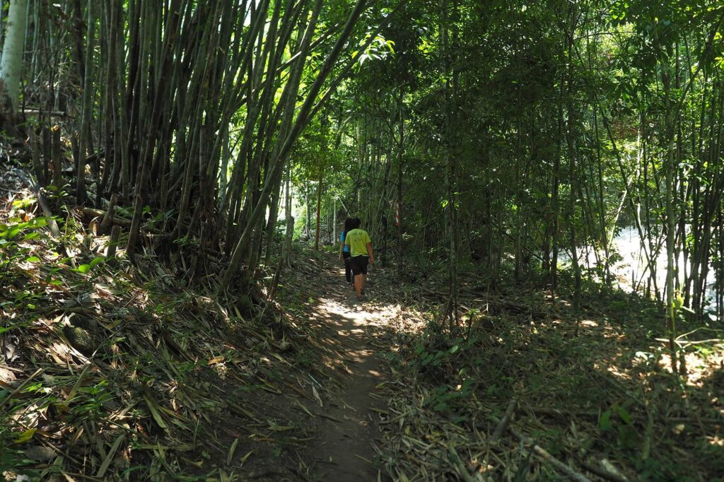 Walking into the bamboo forest