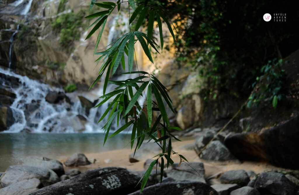 Bamboo leaves in front of the waterfall