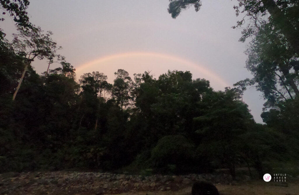 rainbow behind tree silhouette
