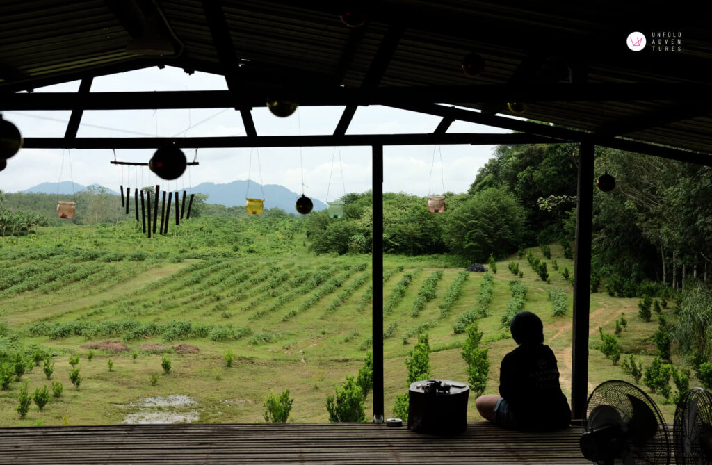 A person sitting at the edge of the farm house looking at the farm view