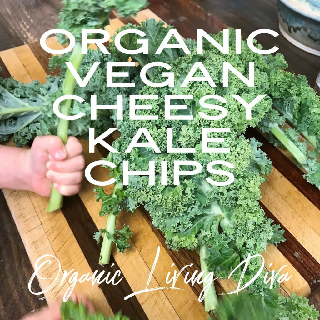 Prepping the Kale for Organic Vegan Cheesy Kale Chips