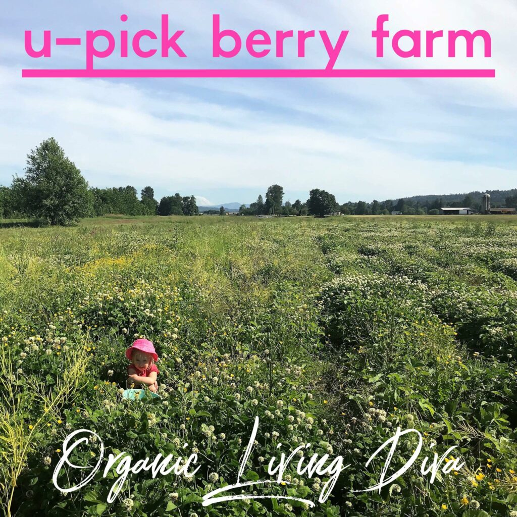 U-pick strawberry farm field  and a toddler