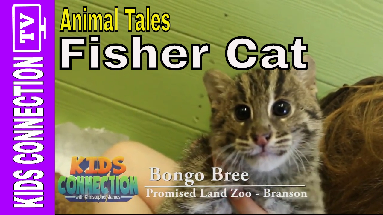 Animal Tales: Fisher Cat with Bongo Bree