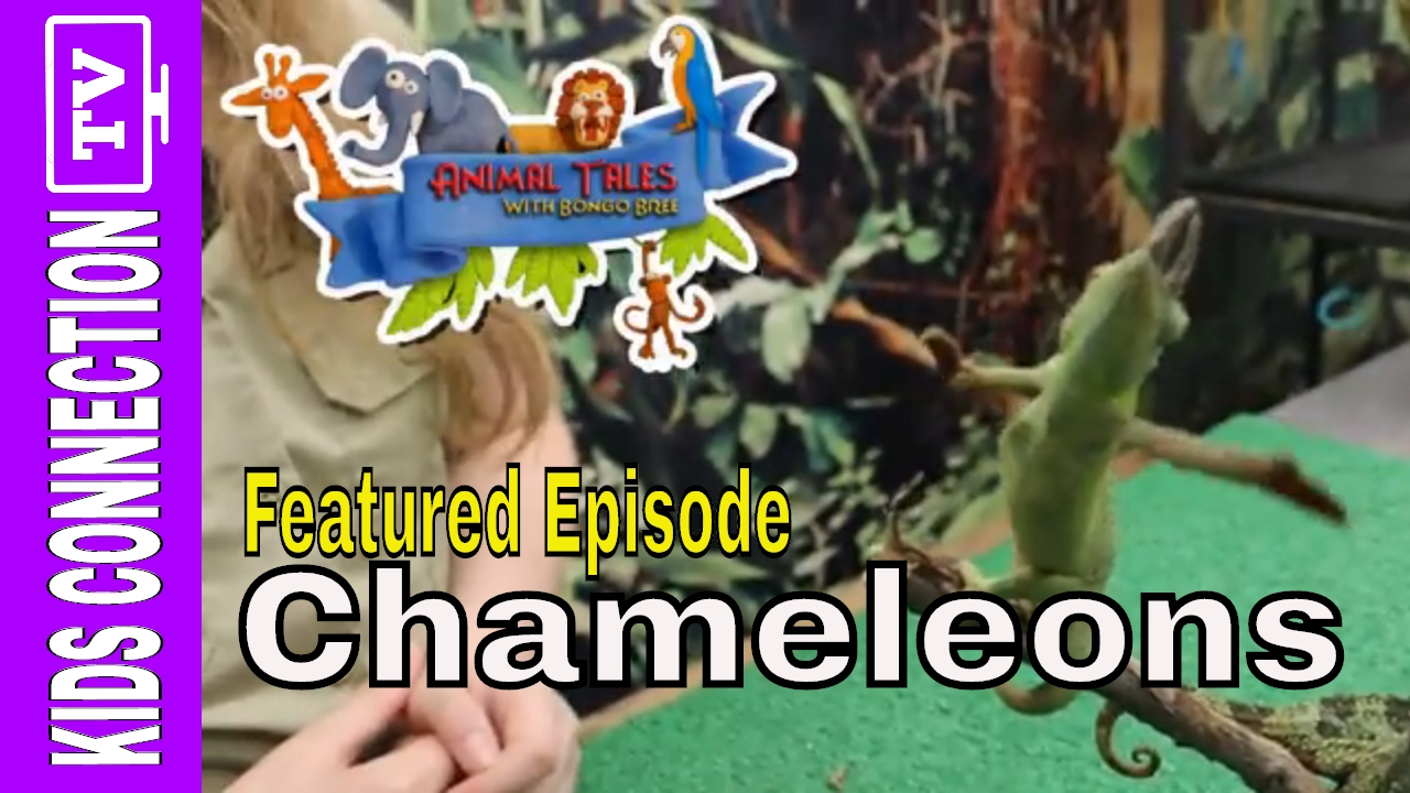 Animal Tales: Chameleons with Bongo Bree