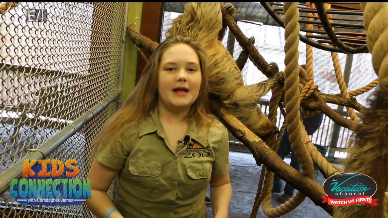 Bongo Bree Sloth Encounter on Kids Connection