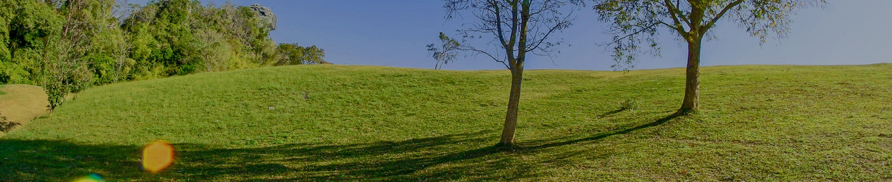 green grass, trees and blue sky