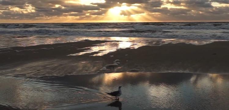 Tranquility Tuesday #16 Blue Dawn