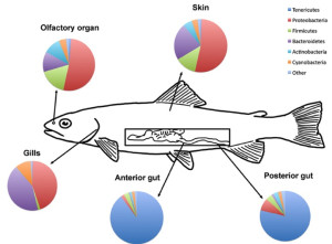 Rainbow Trout Figure - Woodhams et al 2015