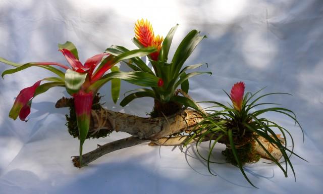 Bromeliad Craft