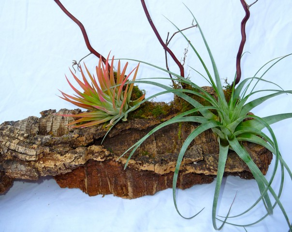 Mount Air Plant to Wood