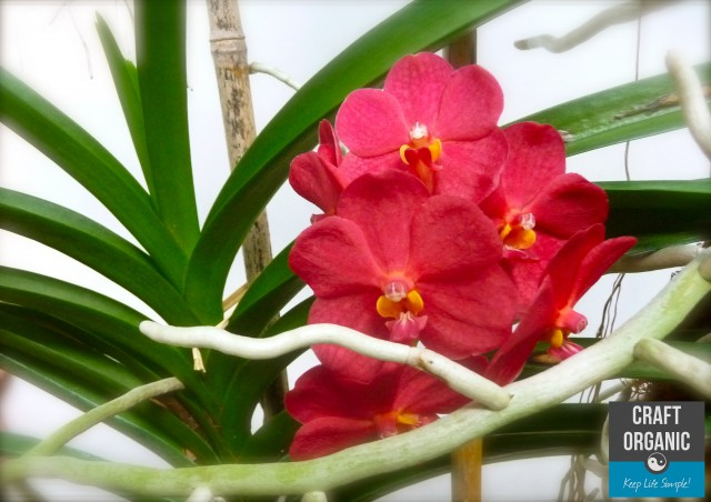 Orchids on Bamboo Lattice
