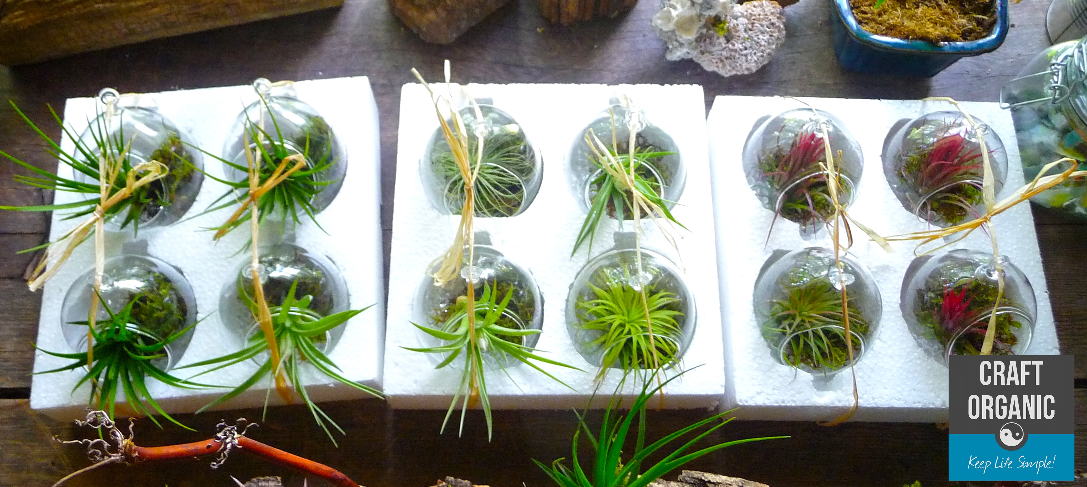 Air Plant In Mini Terrarium Tips