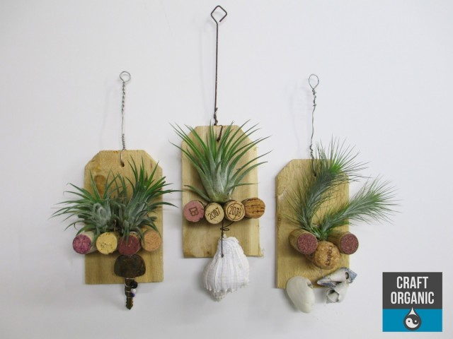 tillandsia and cork plague 01
