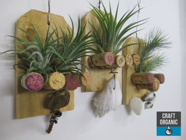 tillandsia and cork plaque 02